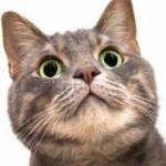 超笑えるwww おもしろ猫動画 総集編-(おもしろい猫のハプニング爆笑動画3)