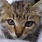 ご機嫌な子猫 – Grooming Kitten – 、かわいい子猫の動画