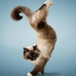 ドラミ♪アイアイ♪歌う♪(特技のある猫1)、本当に歌える猫でした