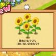 ほしの島のにゃんこ 夏の花束を作るためのひまわり